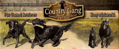 Country Gang