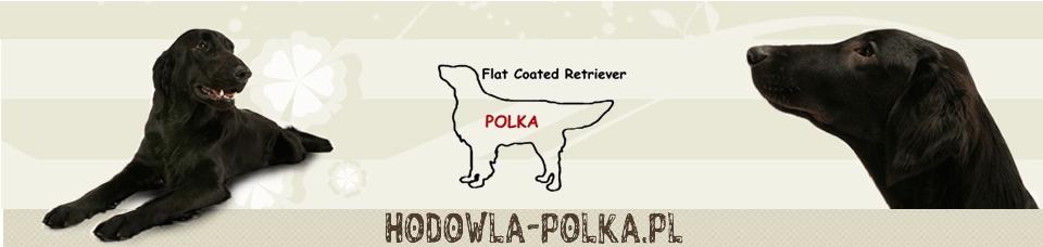 Polka Poland